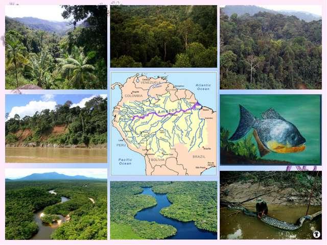 4 чтец: Большую часть территории всей Бразилии /составляют Амазонские джунгли...