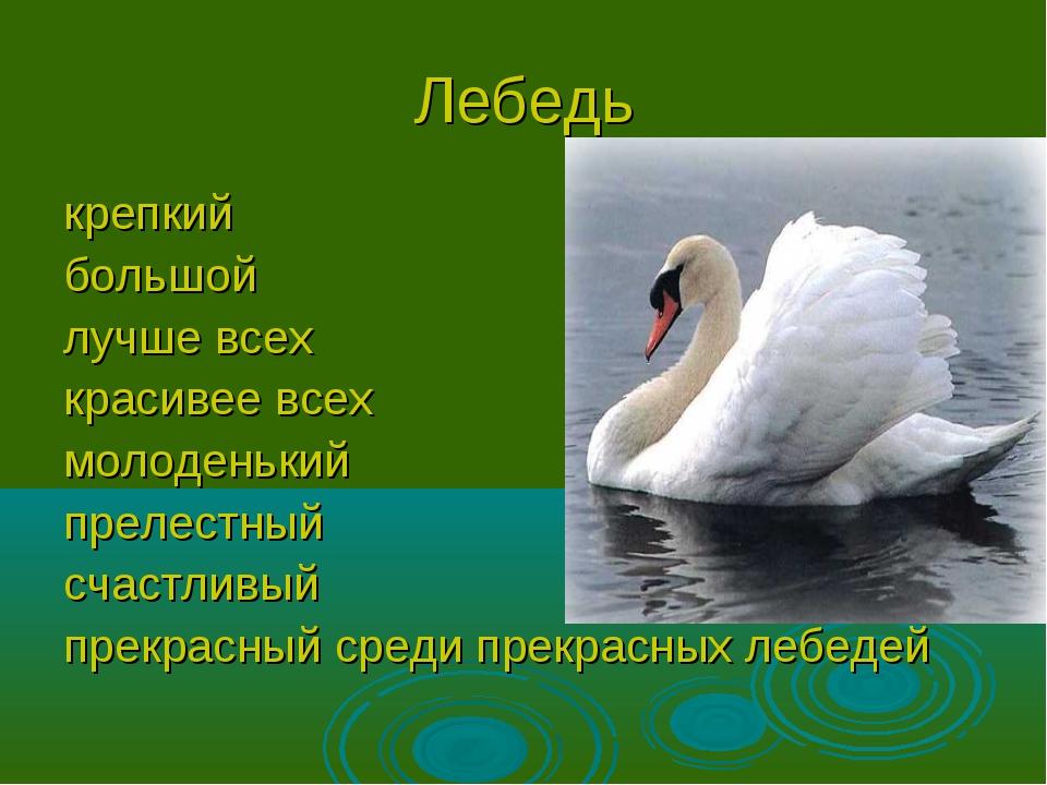 Лебедь крепкий большой лучше всех красивее всех молоденький прелестный счастл...