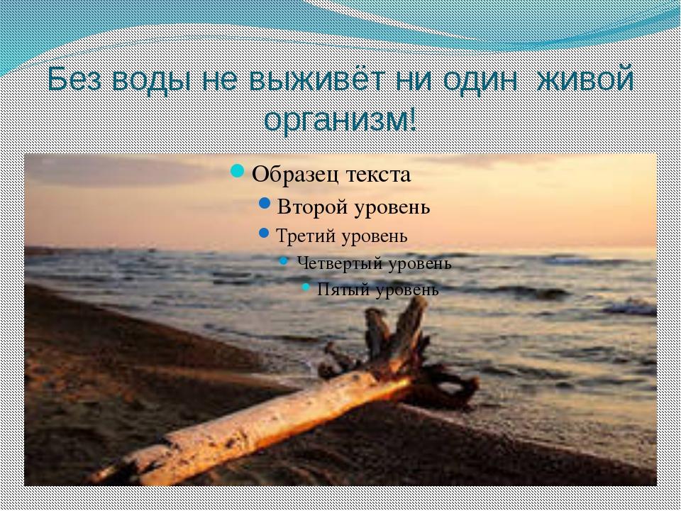 Без воды не выживёт ни один живой организм!