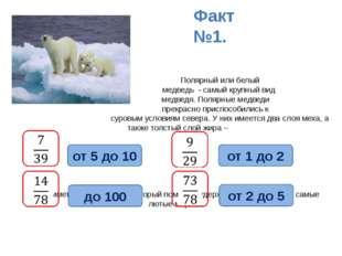 Полярный илибелый медведь - самый крупный вид медведя. Полярные медведи пр