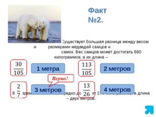 Существует большая разница между весом и размерами медведей самцов и самок.
