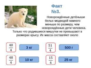 Новорождённые детёныши белых медведей намного меньше по размеру, чем новорож