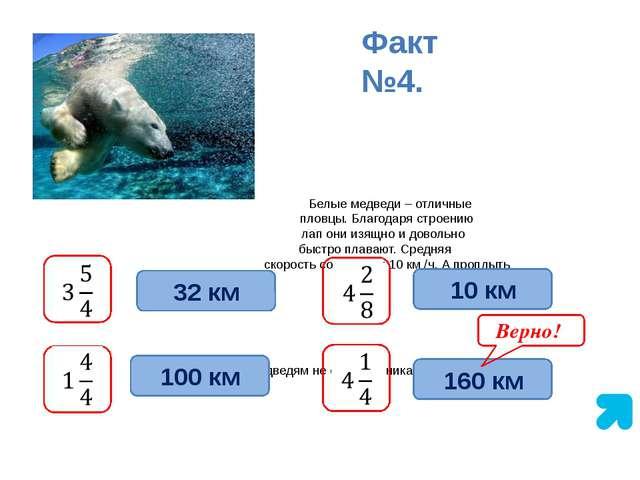 Белые медведи – отличные пловцы. Благодаря строению лап они изящно и довольн...