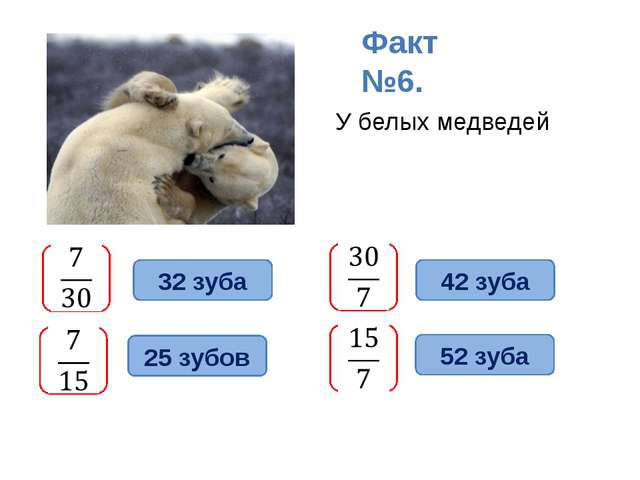 У белых медведей Факт №6. 32 зуба 42 зуба 52 зуба 25 зубов