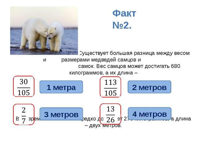 Существует большая разница между весом и размерами медведей самцов и самок....