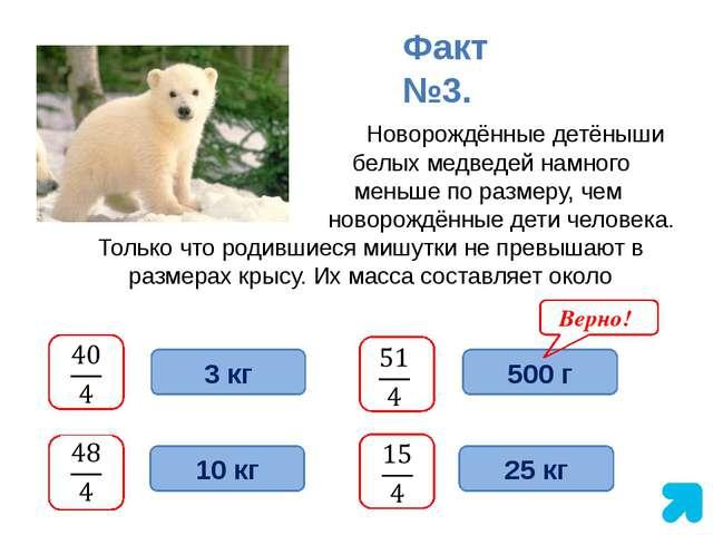 Новорождённые детёныши белых медведей намного меньше по размеру, чем новорож...