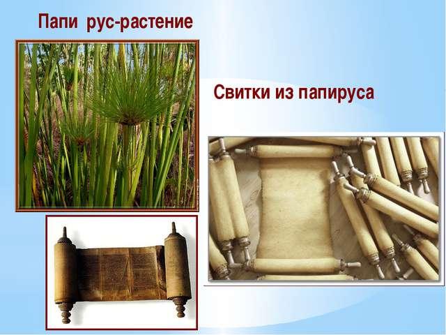 Папи́рус-растение Свитки из папируса