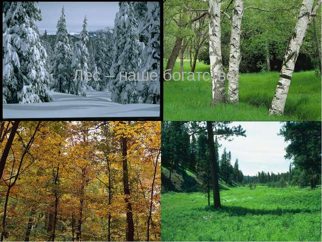 Лес – наше богатство!