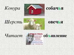 Конура собачья Шерсть овечья Читает объявление