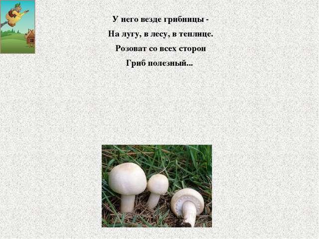 У него везде грибницы - На лугу, в лесу, в теплице. Розоват со всех сторон Гр...