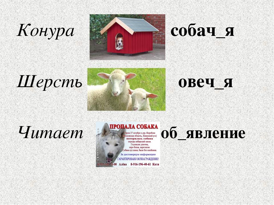 Конура собач_я Шерсть овеч_я Читает об_явление