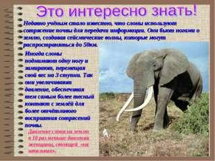 Недавно учёным стало известно, что слоны используют сотрясение почвы для пере