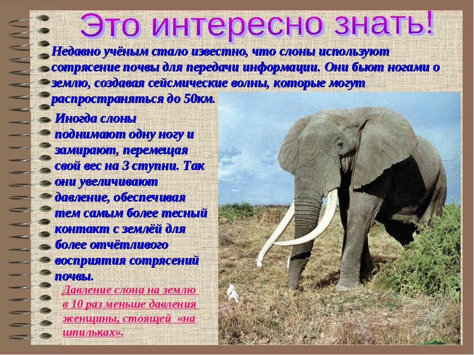 Недавно учёным стало известно, что слоны используют сотрясение почвы для пере...
