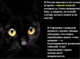 В России опасаются не только встречи с чёрной кошкой, которая уж точно напрор