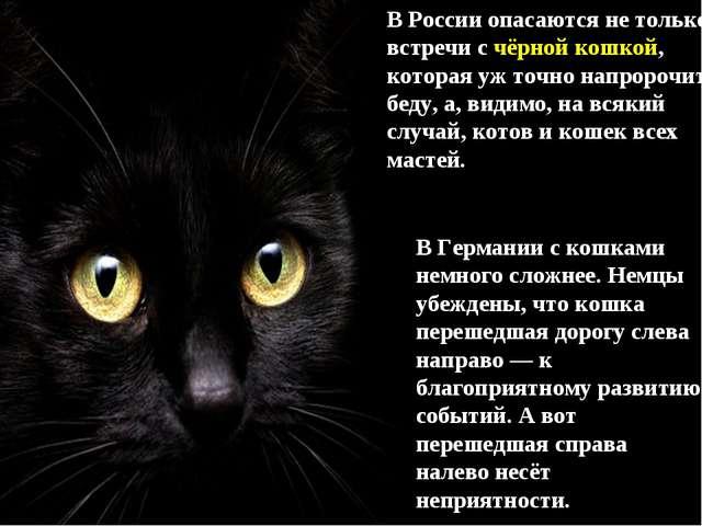 В России опасаются не только встречи с чёрной кошкой, которая уж точно напрор...