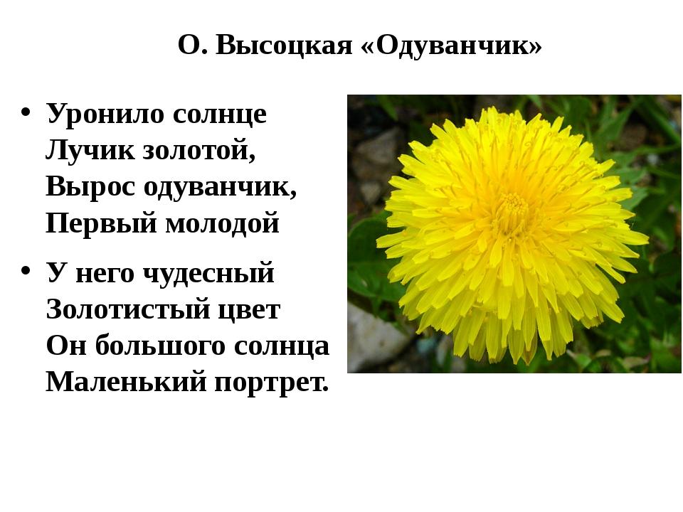 О. Высоцкая «Одуванчик» Уронило солнце Лучик золотой, Вырос одуванчик, П...