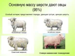 Основную массу шерсти дают овцы (95%) Особый интерес представляют породы, даю