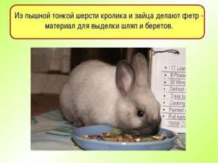 Из пышной тонкой шерсти кролика и зайца делают фетр - материал для выделки шл