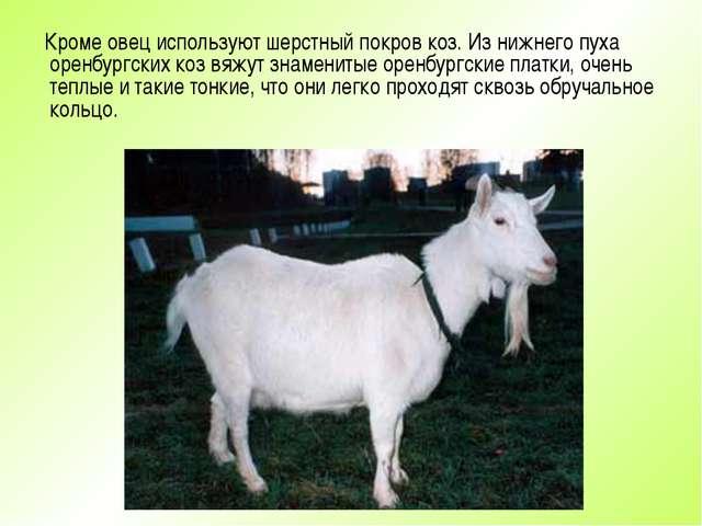 Кроме овец используют шерстный покров коз. Из нижнего пуха оренбургских коз...