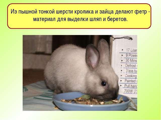 Из пышной тонкой шерсти кролика и зайца делают фетр - материал для выделки шл...