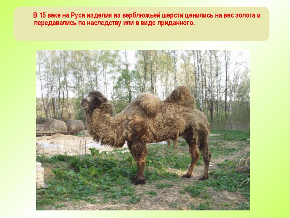В 15 веке на Руси изделия из верблюжьей шерсти ценились на вес золота и пере...