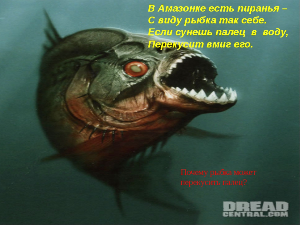 В Амазонке есть пиранья – С виду рыбка так себе. Если сунешь палец в воду, П...