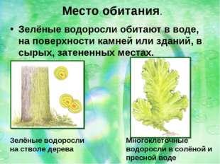 Зелёные водоросли обитают в воде, на поверхности камней или зданий, в сырых,