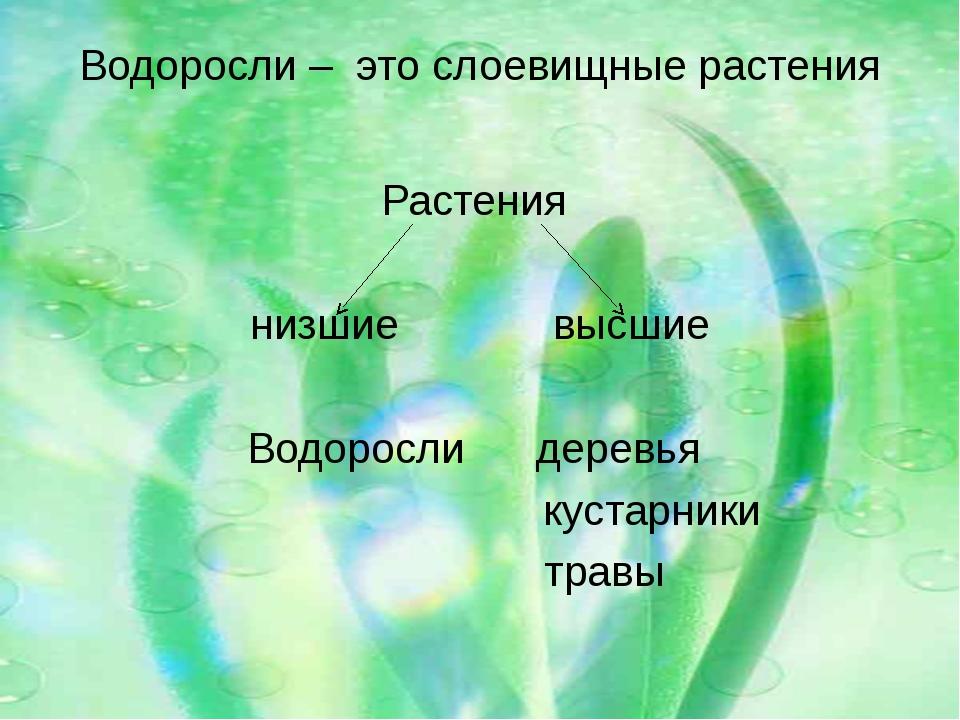 Водоросли – это слоевищные растения Растения низшие высшие Водоросли деревья...