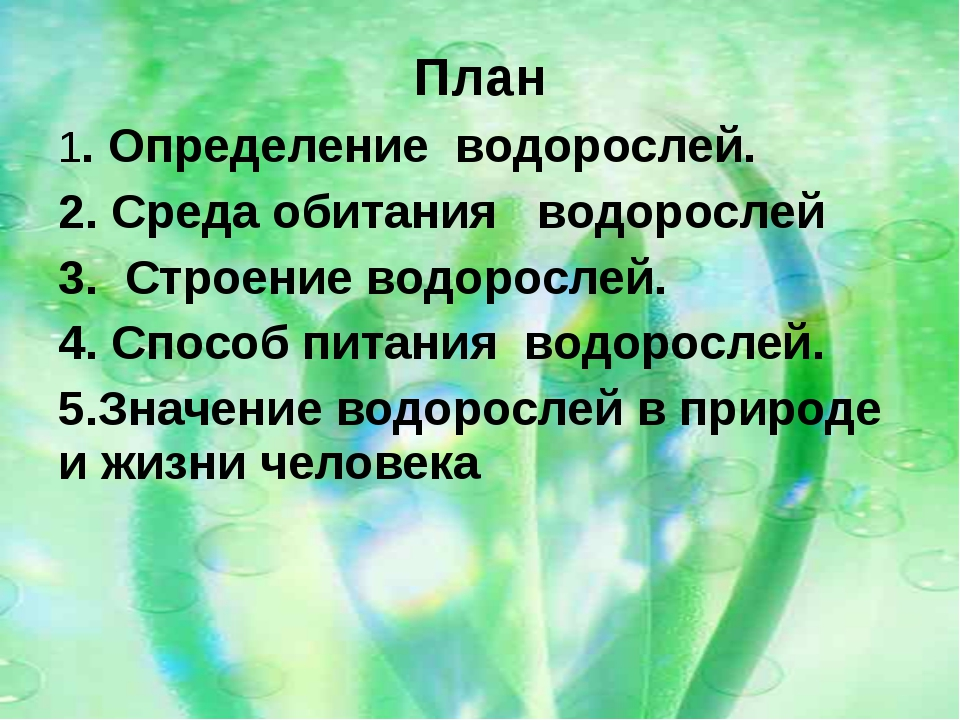 План 1. Определение водорослей. 2. Среда обитания водорослей 3. Строение водо...