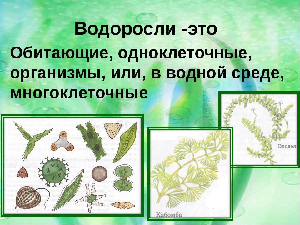 Водоросли -это Обитающие, одноклеточные, организмы, или, в водной среде, мног...