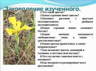 Закрепление изученного. 1.Что такое цветок? 2.Какое строение имеет цветок? 3.