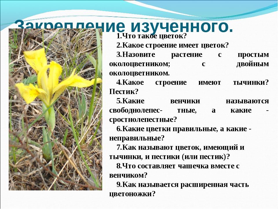 Закрепление изученного. 1.Что такое цветок? 2.Какое строение имеет цветок? 3....