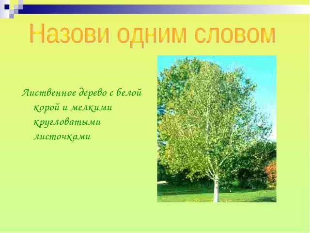 Лиственное дерево с белой корой и мелкими кругловатыми листочками
