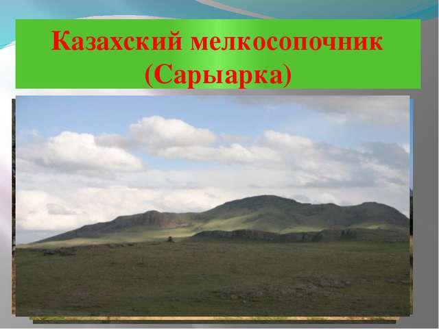 Казахский мелкосопочник (Сарыарка)