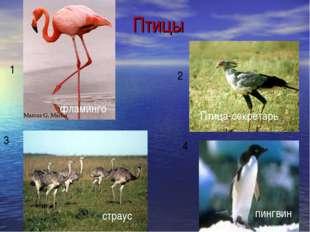 Птицы 1 2 3 4 фламинго Птица-секретарь страус пингвин