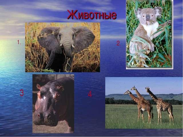 Животные 1. 2. . . 3 4