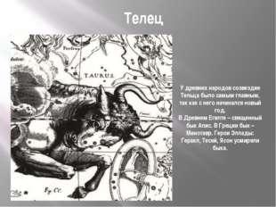 Телец У древних народов созвездие Тельца было самым главным, так как с него н