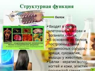 Обеспечивается особыми сократительными белками. Осуществляется движение ресни