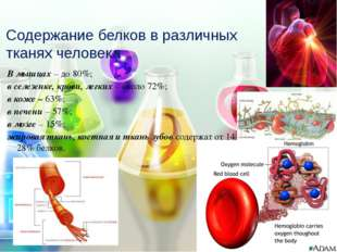 В мышцах – до 80%; в селезенке, крови, легких – около 72%; в коже – 63%; в пе