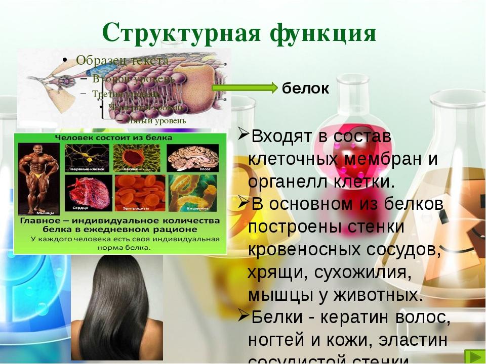 Обеспечивается особыми сократительными белками. Осуществляется движение ресни...