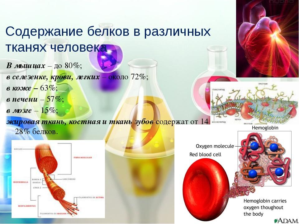 В мышцах – до 80%; в селезенке, крови, легких – около 72%; в коже – 63%; в пе...