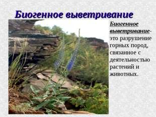 Биогенное выветривание Биогенное выветривание- это разрушение горных пород, с