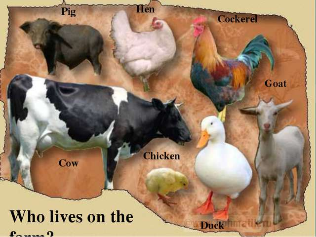 Who lives on the farm? Pig Cockerel Hen Cow Duck Chicken Goat
