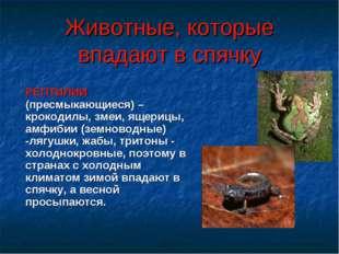 Животные, которые впадают в спячку РЕПТИЛИИ (пресмыкающиеся) – крокодилы, зме