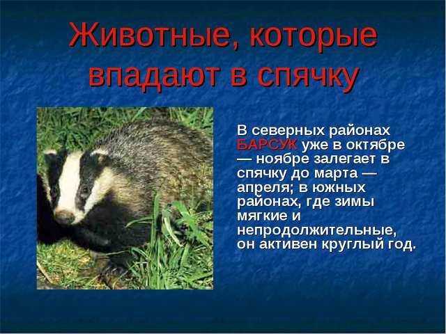 В северных районах БАРСУК уже в октябре — ноябре залегает в спячку до марта...