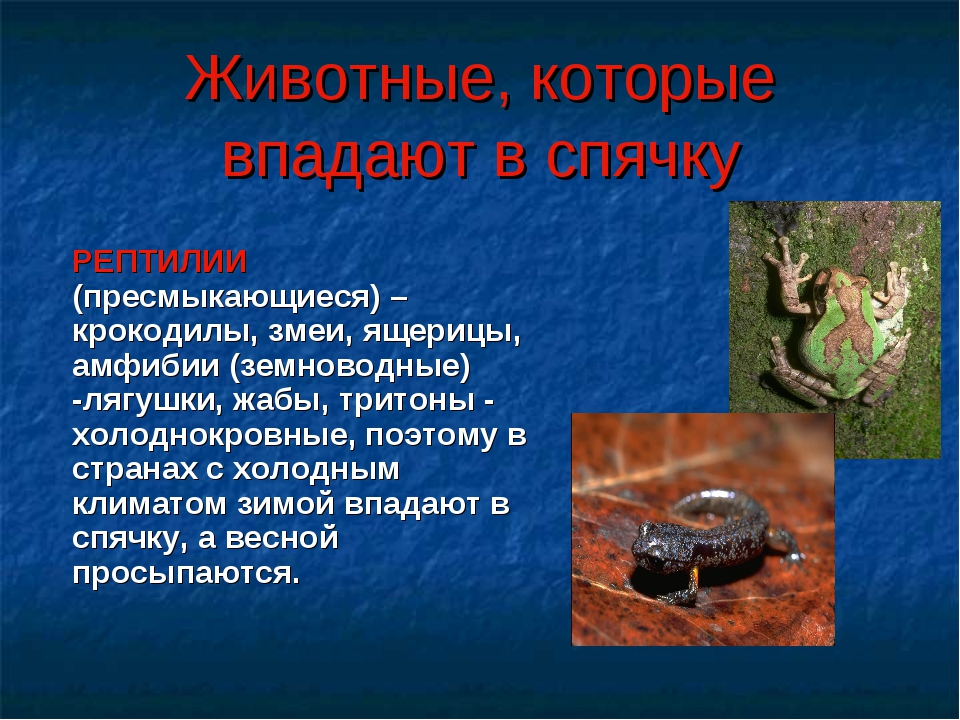 Животные, которые впадают в спячку РЕПТИЛИИ (пресмыкающиеся) – крокодилы, зме...