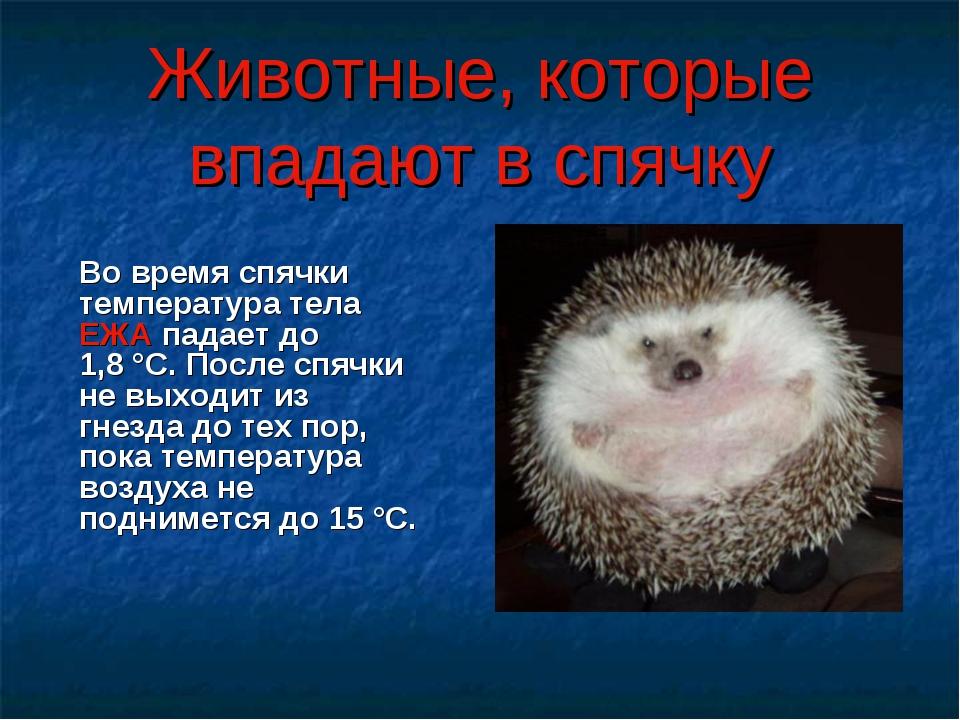kogda-u-cherepah-konchaetsya-zimnyaya-spyachka