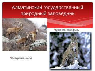 *туркестанская рысь *Сибирский козел Алматинский государственный природный з