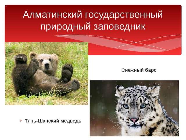 Снежный барс Тянь-Шанский медведь Алматинский государственный природный запо...