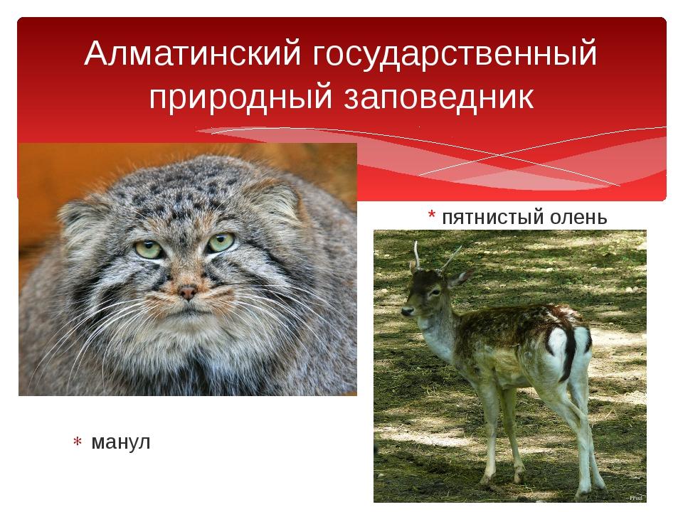 * пятнистый олень манул Алматинский государственный природный заповедник